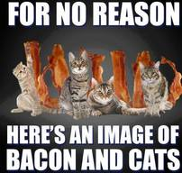 Why Are Bacon And Cats So Popular?