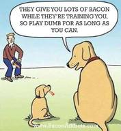 Bacon Training!