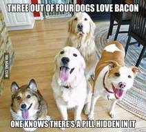 Most Dogs Love Bacon Too!