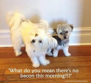No Bacon!?!
