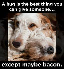Hugs Or Bacon!