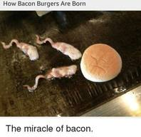 Miracle Of Bacon!