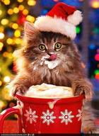 Caffeine Christmas Kitty!