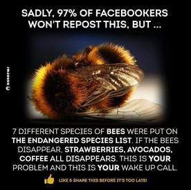 Bees Are Important To Our Caffeine!