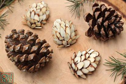 Chocolate Pinecones!