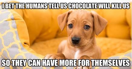 Dog Mind Reader!