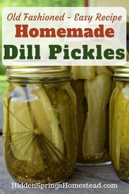 Old Fashioned Dill Pickles!