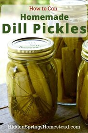 Classic Homemade Dill Pickles!