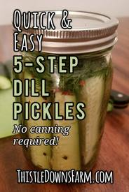 5 Step Dill Pickles!