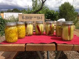 Lemon Dill Pickles!