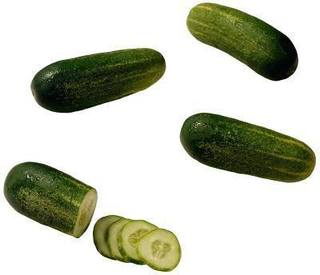 How To Grow A Cucumber Bush Pickle!