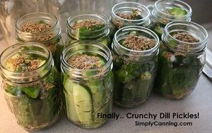 Crunchy Dill Pickles!