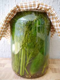 Giant Dill Pickles!