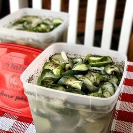 Garlic & Dill Freezer Pickles!