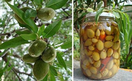 Pickled Green Almonds!