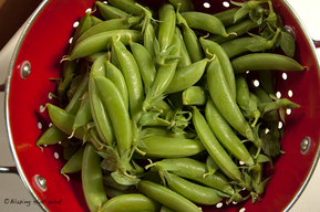 Pickled Sugar Snap Peas!