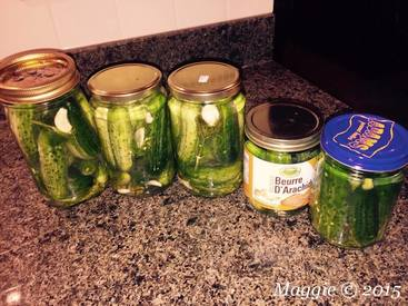 Brine Fermented Dill Pickles!