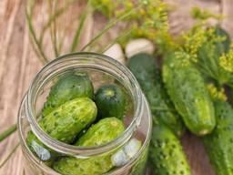 Truly Crunchy Dill Pickles!