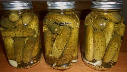 Crunchiest Dill Pickles!