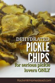 Dehydrated Pickle Chips!